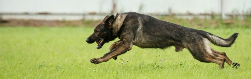 Основные направления спортивной деятельности собак