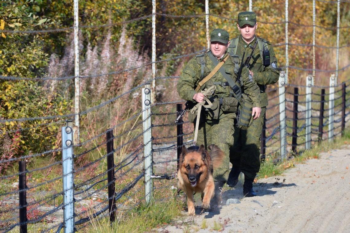Розыскные собаки, порядок розыскной деятельности