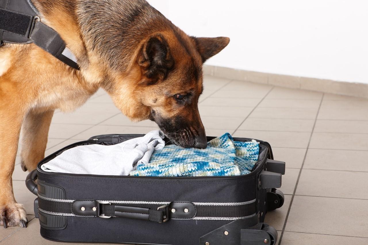 Розыскные собаки, Особенности розыскной работы