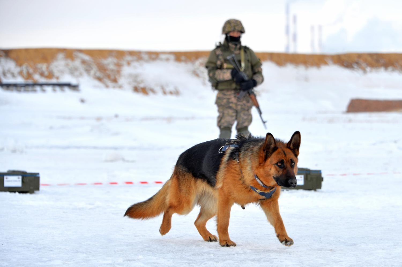 Розыскные собаки, описание группы