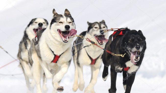Спортивные породы собак