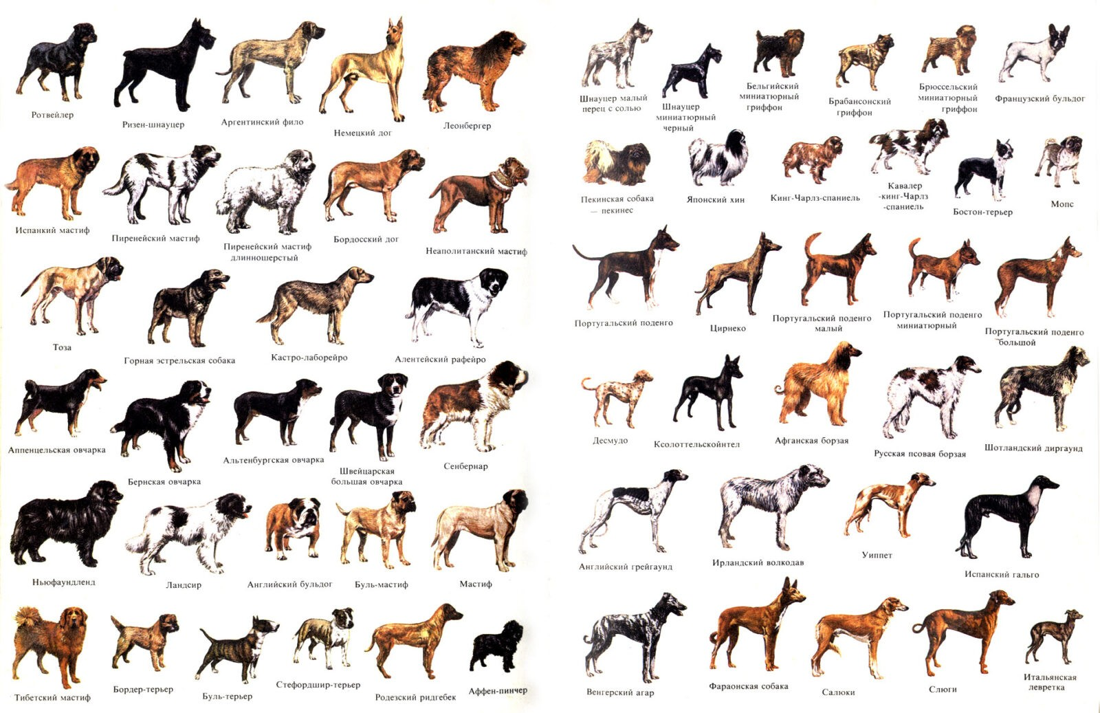 Породы собак: полный список, описание популярных пород с фото.