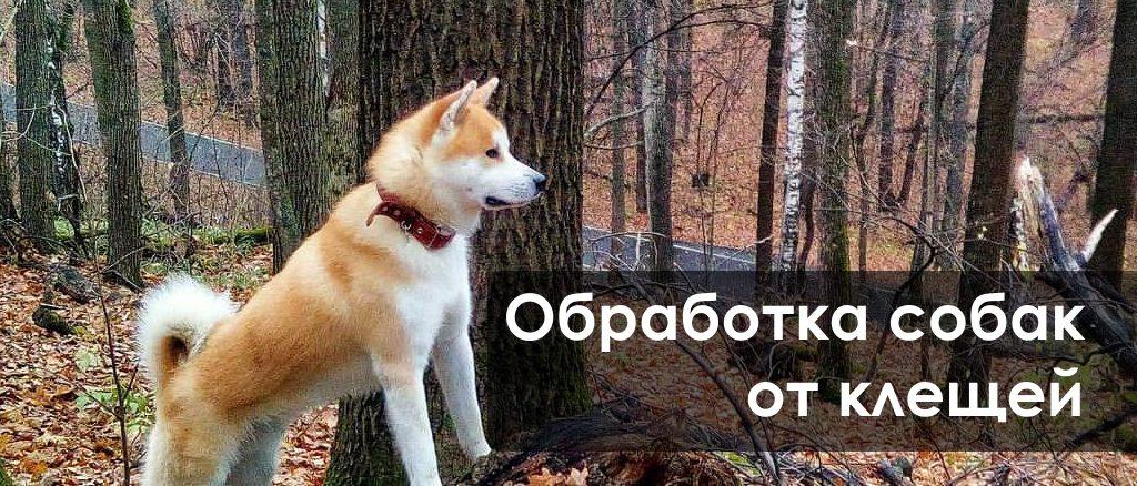 Как правильно должна быть Обработка собак от клещей