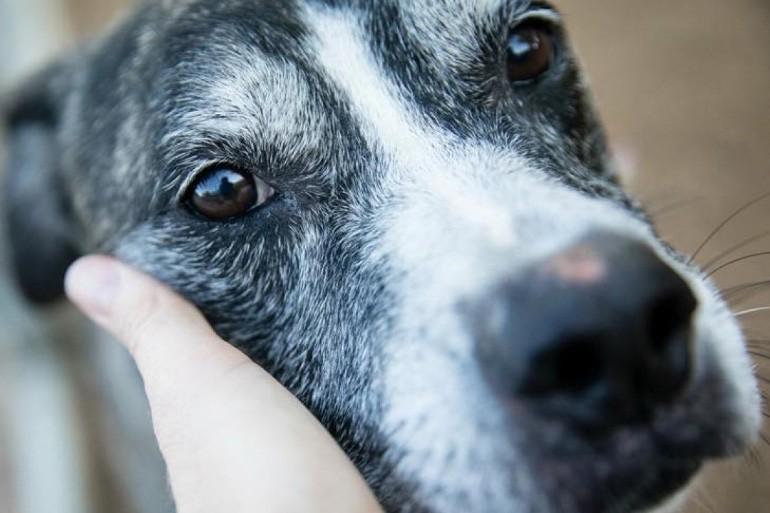 С момента заражения до проявления клинических признаков питомец может отлично себя чувствовать. В первую очередь должно насторожить внезапное изменение в состоянии животного.