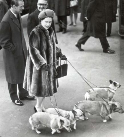 Вельш-корги пемброк пользуются популярностью, так как их обожает королева Елизавета II
