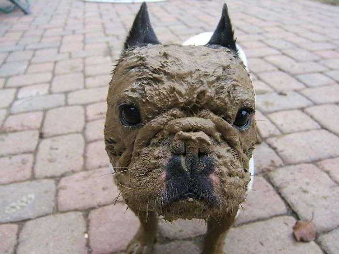 Благодаря тому, что шерсть собак может самоочищаться, и в отличие от человека они не потеют, подвергать их процедуре купания без необходимости - необязательно.
